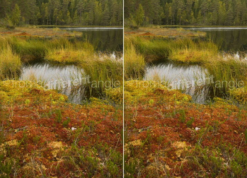 Digimarc watermark examples: left without watermark, right with watermark