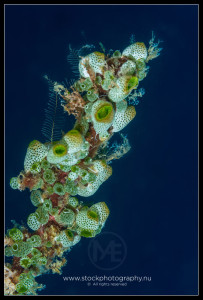 Soft corals growing on a coral branch